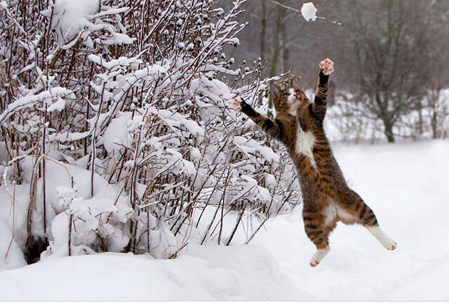 Catch-the-snow